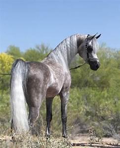 17+ best images about Horses on Pinterest | Arabian horses ...