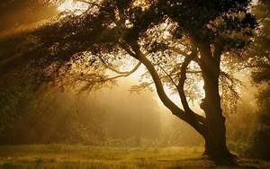 Nature, Landscape, Mist, Trees, Sunrise, Forest, Grass, Sun, Rays, Atmosphere, Summer, Wallpapers
