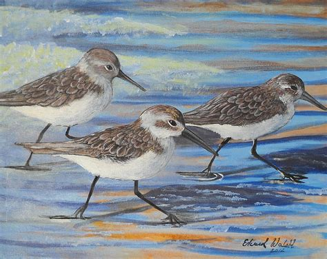 coastal shower sand pipers painting by edward walsh