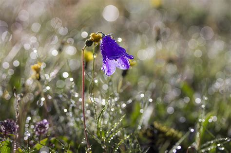 images nature grass blossom dew meadow flower