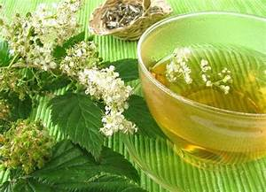 Иван чай при лечении простатита и аденомы