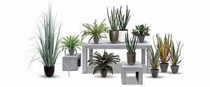 Online Pflanzen Kaufen : kunstpflanzen online kaufen auf rechnung bei dekoflower ~ Watch28wear.com Haus und Dekorationen