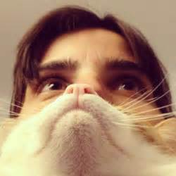 cat beard cat beards are the viral photo fad resource