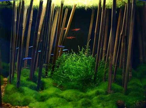 Bamboo Aquascape asian bamboo theme aquascape fish tanks aquarium