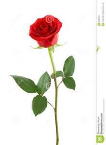 Single Red Rose