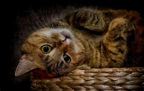 Katze Ohren Reinigen