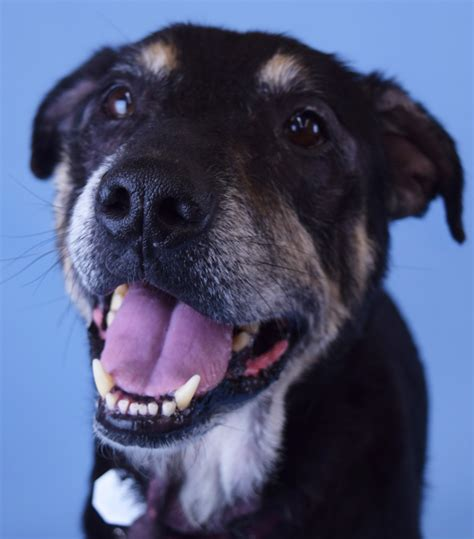 Forever Home Dog Of The Week Bandit News Of Mill Creek