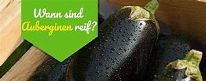 Wann Sind Brombeeren Reif : wann sind auberginen reif 2019 ~ Orissabook.com Haus und Dekorationen