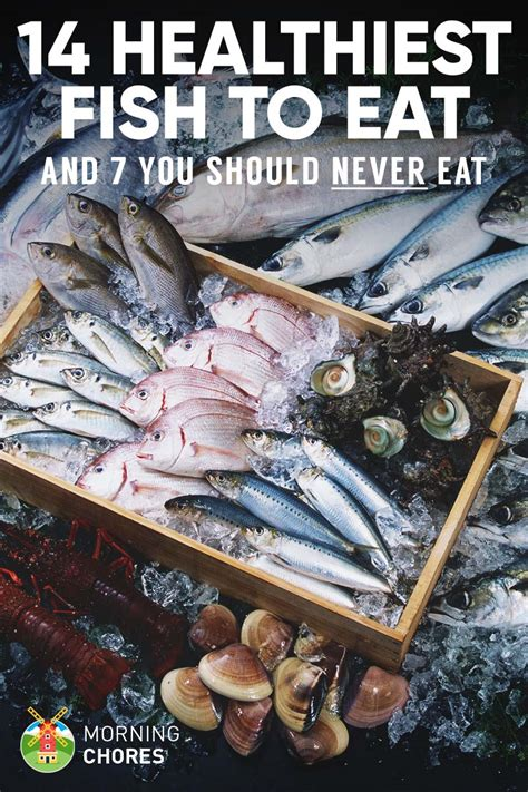 best fish to eat 14 healthiest best fish to eat and 7 to absolutely steer clear of
