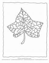 Coloring Ivy Blatt Leaf Printable Template Wonderweirded Wildlife Ausmalbilder Ausmalbild Font Adult Leaves Library Form Outline Colouring Recomendadas Albuns Letzte sketch template