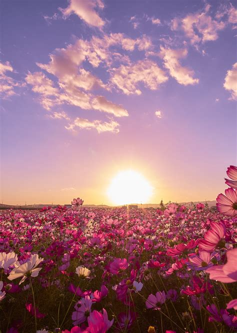 aesthetic nature wallpapers top  aesthetic nature