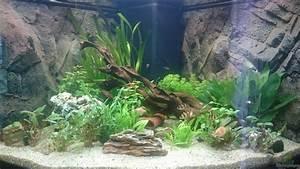 Pflanzen Im Aquarium : pflanzen im aquarium juwel trigon 350 wohnzimmer aus juwel ~ Michelbontemps.com Haus und Dekorationen