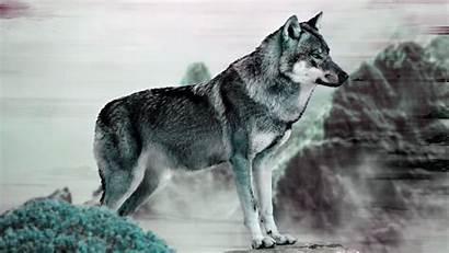 Wolf 4k Grey Uhd Wallpapers Ultra 1080p