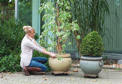 Tipps Winterschutz Kübel Und Topfpflanzen Winterschutzde