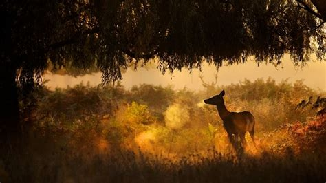 deer animal forest hd wallpaper download high quality