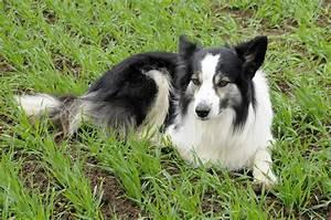 Flöhe Hund Mensch : kurzmeldung under cover fl he beim hund bundesverband f r tiergesundheit e v ~ Yasmunasinghe.com Haus und Dekorationen