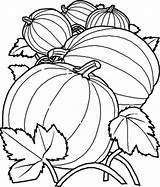 Pumpkin Coloring Drawing Pumpkins Printable Benefits Bestappsforkids Giant Sheets Colour Vine Kidsplaycolor Colorir Stumble Tweet Salvo sketch template