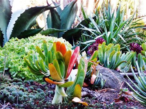 mediterrane pflanzen für den garten mediterrane pflanzen f 252 r den garten garten haus