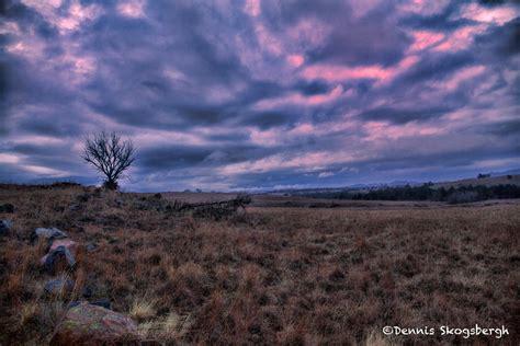 forests trees  prairies dennis skogsbergh