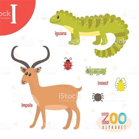 animals that start with the letter i letter i animals animals in vector 7386