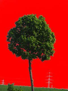 photoshop tutorial   create  perfect cutout tree
