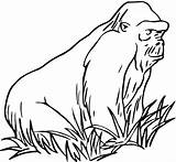 Gorilla Coloring Pages Grass Animals Mountain Zoo Gorillas Print Animal Printable Ape Supercoloring Myst sketch template