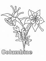 Columbine Coloring Flowers Flower Peony Sketch Printable Template Recommended Iris sketch template