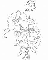 Coloring Pages Peony Peonies Hydrangea Drawing Outline Simple Flowers Flower Line Clusters Patterns Getdrawings Justpaintitblog Adult sketch template