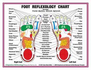 Buy 8 5 U0026quot  X 11 U0026quot  Foot And Hand Charts Set