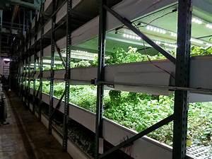 Commercial, Hydroponic, Farm, Grow, Trays