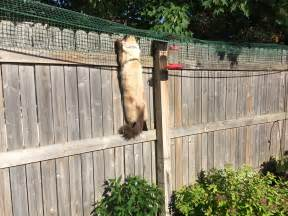 cat fence cat containment fence one reader shares how he contains