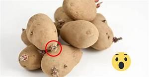 Kartoffeln Lagern Wohnung : keimen von kartoffeln leg einen apfel dazu ~ Lizthompson.info Haus und Dekorationen