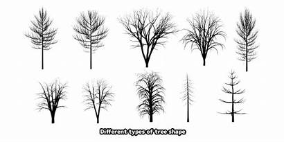 Tree Shapes Trees Different Trunk Branches Tutorial