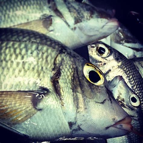 cuisiner poisson surgelé redonner sa fraîcheur à un poisson surgelé guide astuces