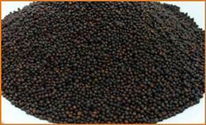 Century Spices (P) Ltd