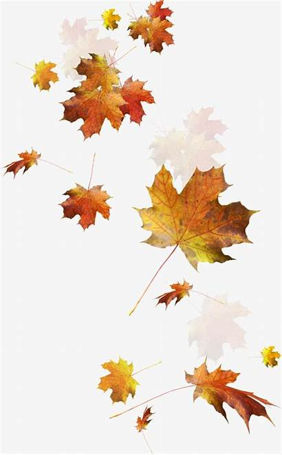 Clipart Folhas Caindo Leaves Falling Fall Transparent