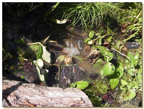 construction d un bassin pour tortues palustres