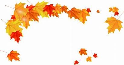 Leaves Falling Autumn Leaf Maple Golden Transparent