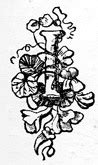 fancy letter s file fancy letter i jpg wikimedia commons 21669   Fancy Letter I
