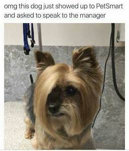 17 best images about the beauty salonoh humor on With petsmart dog dryer