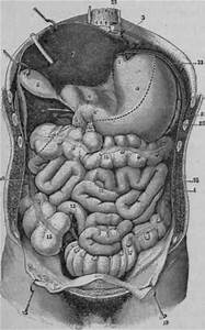 The Duodenum