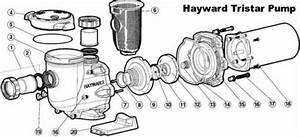 Hayward Tristar Inground Pool Pump  U2013 Give Your Pool Filter System Superior Water Flow  U0026 Energy