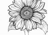Coloring Pages Adults Sunflower Drawing Printable Simple Young Clipartmag Getdrawings Getcolorings sketch template