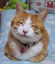 happy cat we are seeking a home 171 advocates for animal rights afar