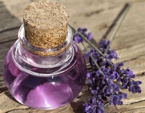 manfaat lavender kesehatan kecantikan