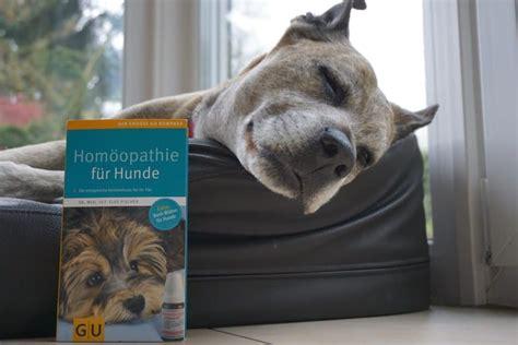 Homöopathie Für Hunde Arthrose