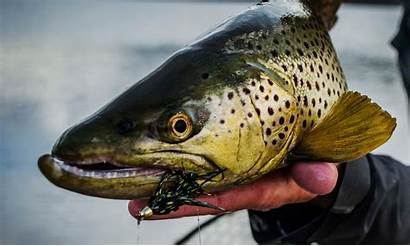 Streamer Fishing Tips Streamers Fly Fish Trout