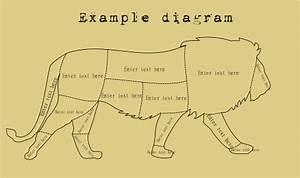 Lion Diagram Gallery