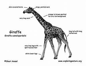 giraffe With giraffe diagram