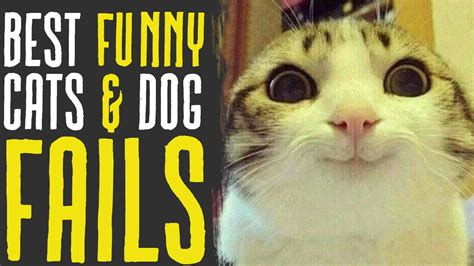 funny cats dog fails animals compilation funny